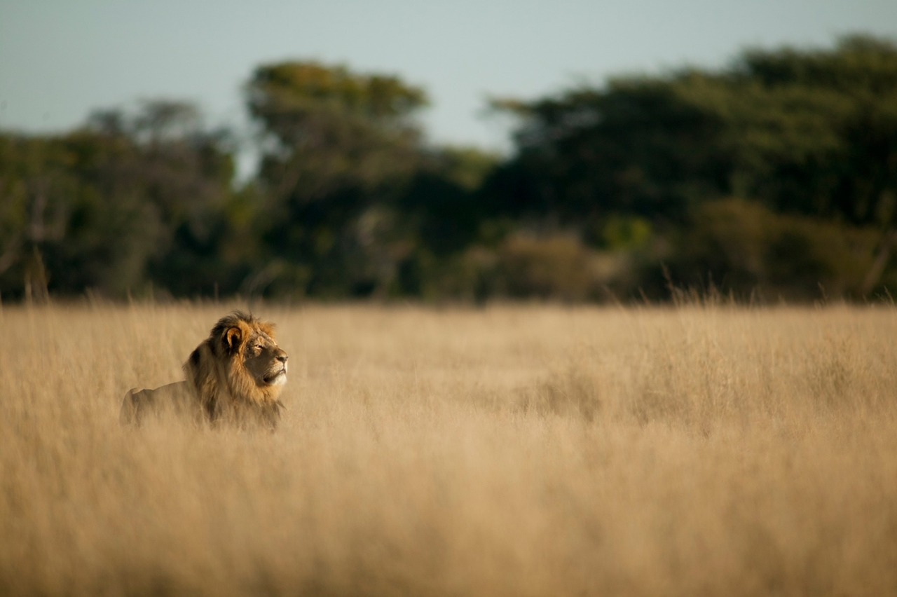 National Park -Hwange- the lion and Cecil 14
