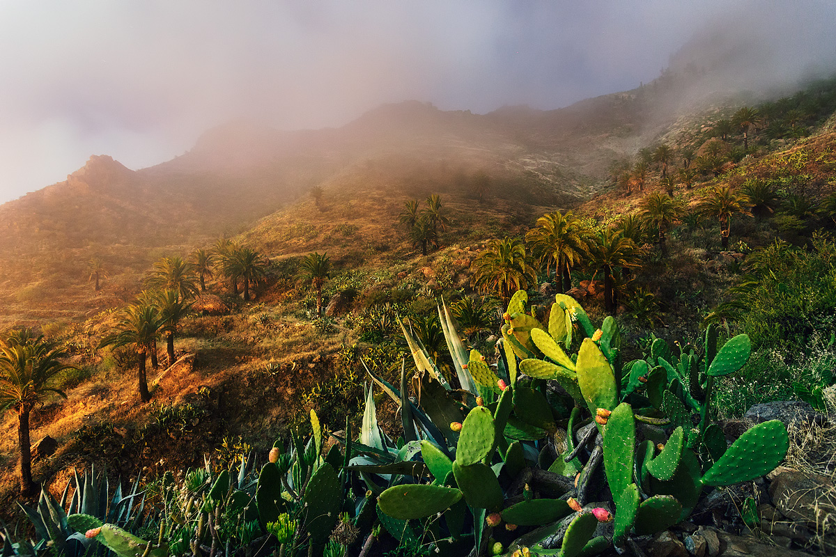 Natural beauty of the Canary Islands in photos of Lucas Furlan 12