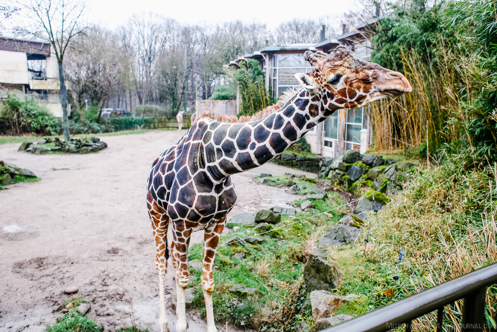 The zoo in Duisburg 05