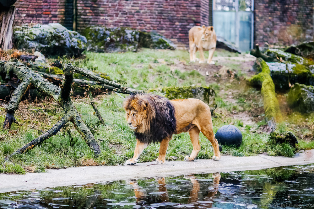 The zoo in Duisburg 08