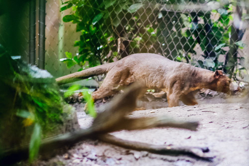 The zoo in Duisburg 12