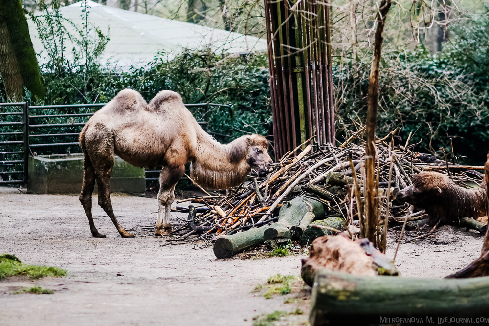 The zoo in Duisburg 17