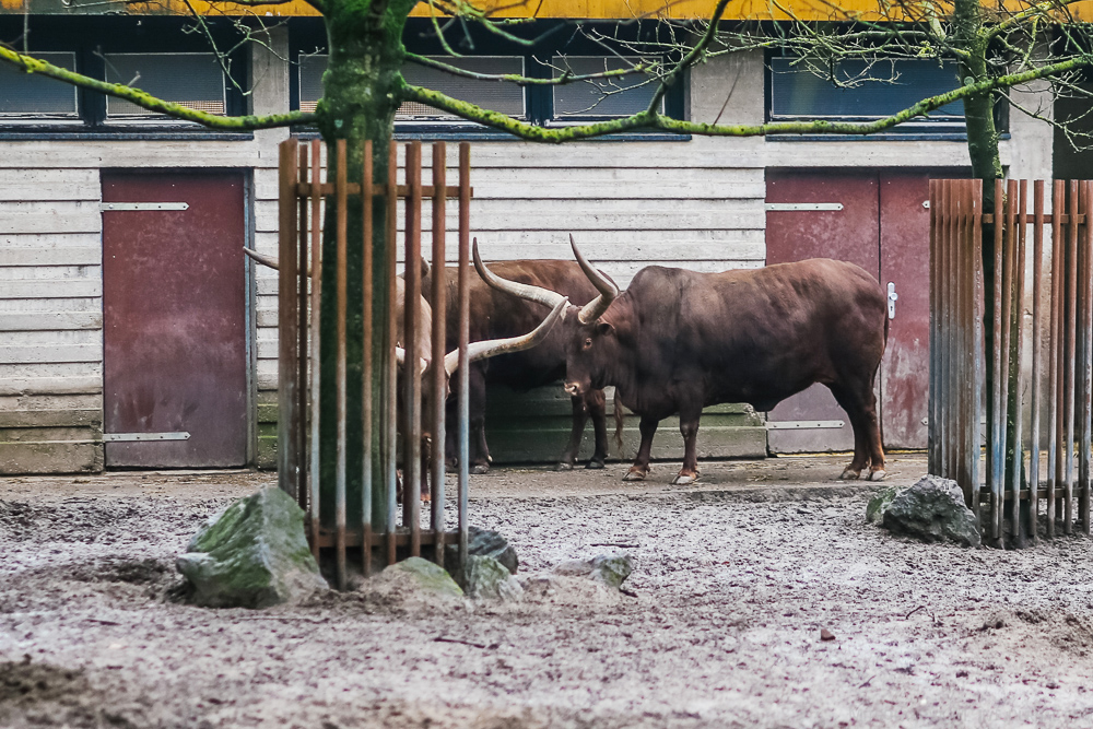The zoo in Duisburg 32
