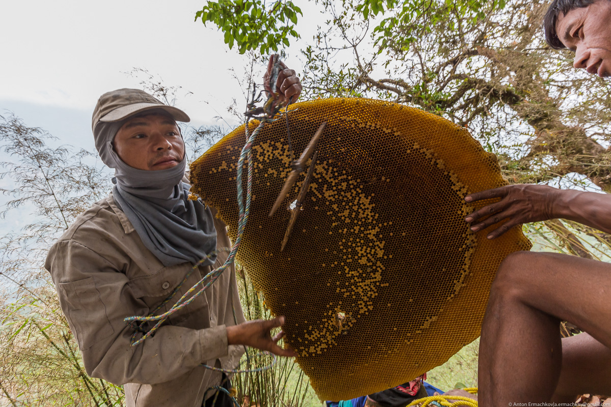 Unknown Himalayas. Harvesting honey of wild bees. Part 2-01