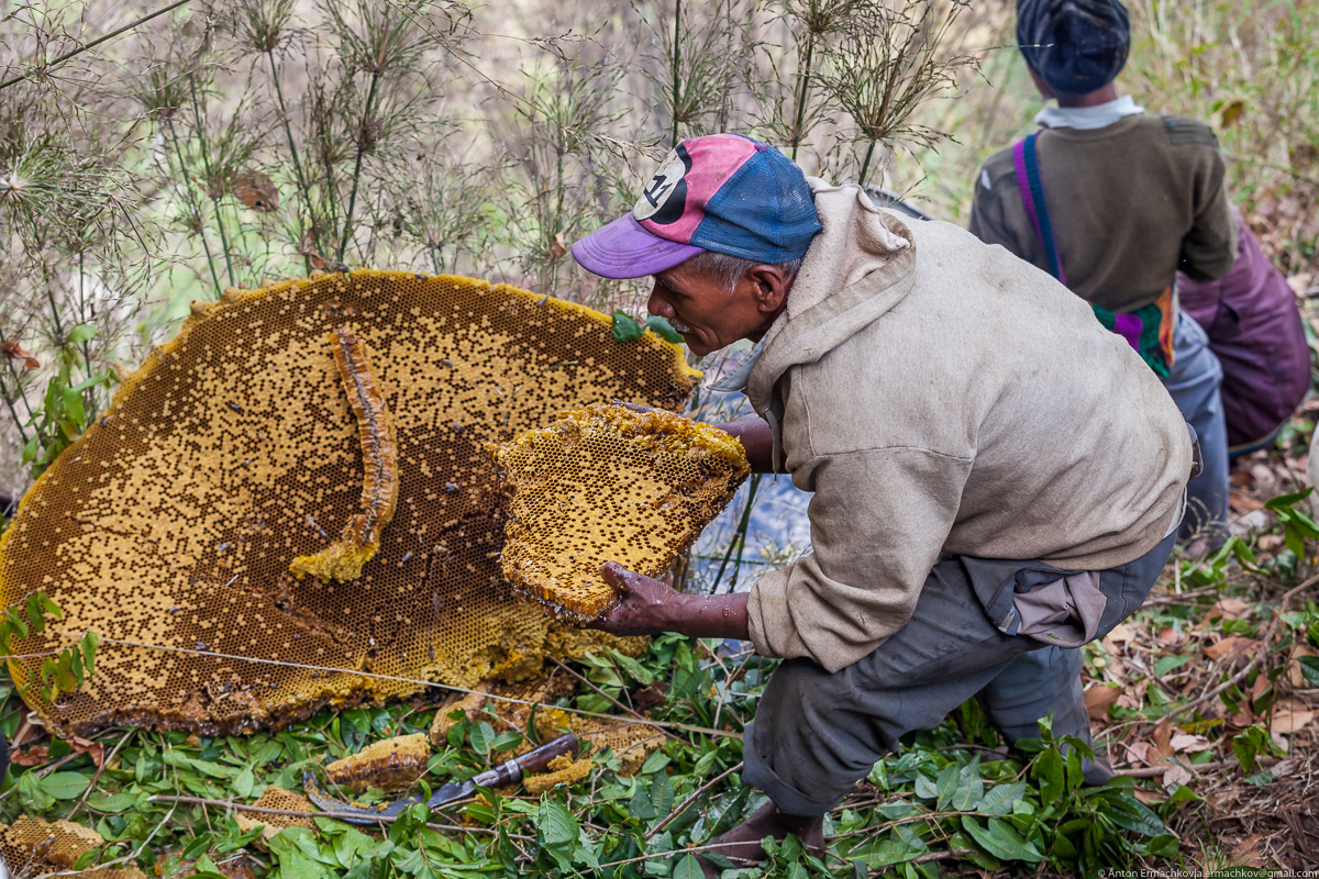Unknown Himalayas. Harvesting honey of wild bees. Part 2-18