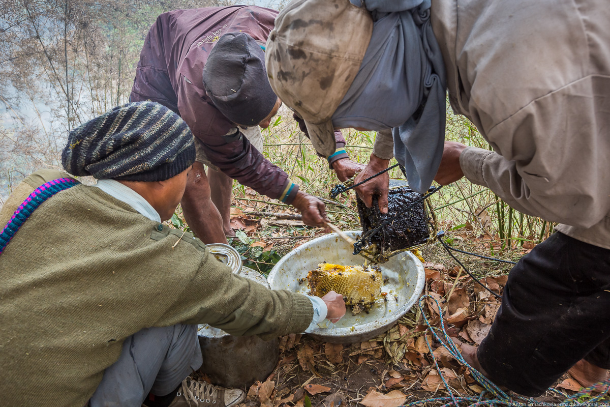Unknown Himalayas. Harvesting honey of wild bees. Part 2-22