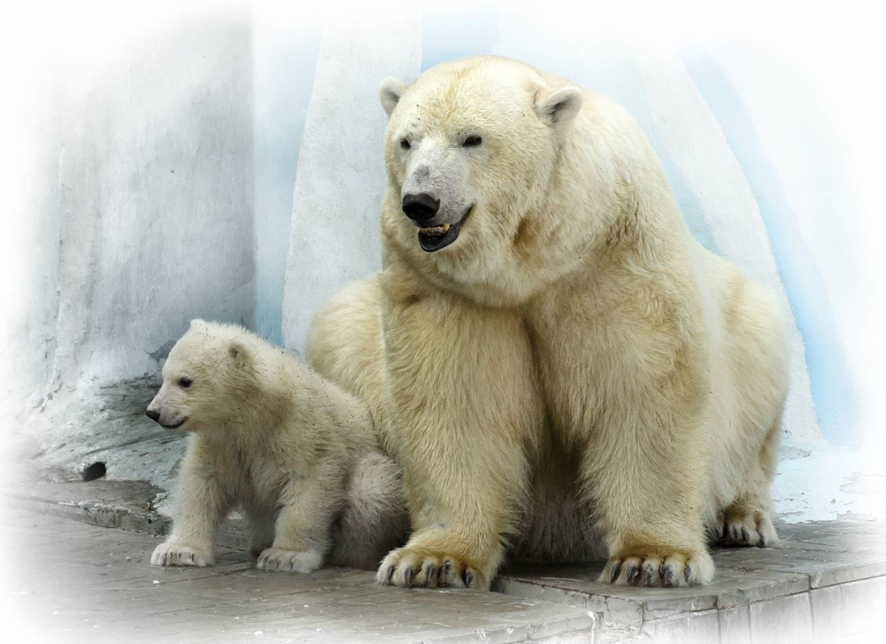 White bear from the zoo of Novosibirsk turned out to be a boy 03