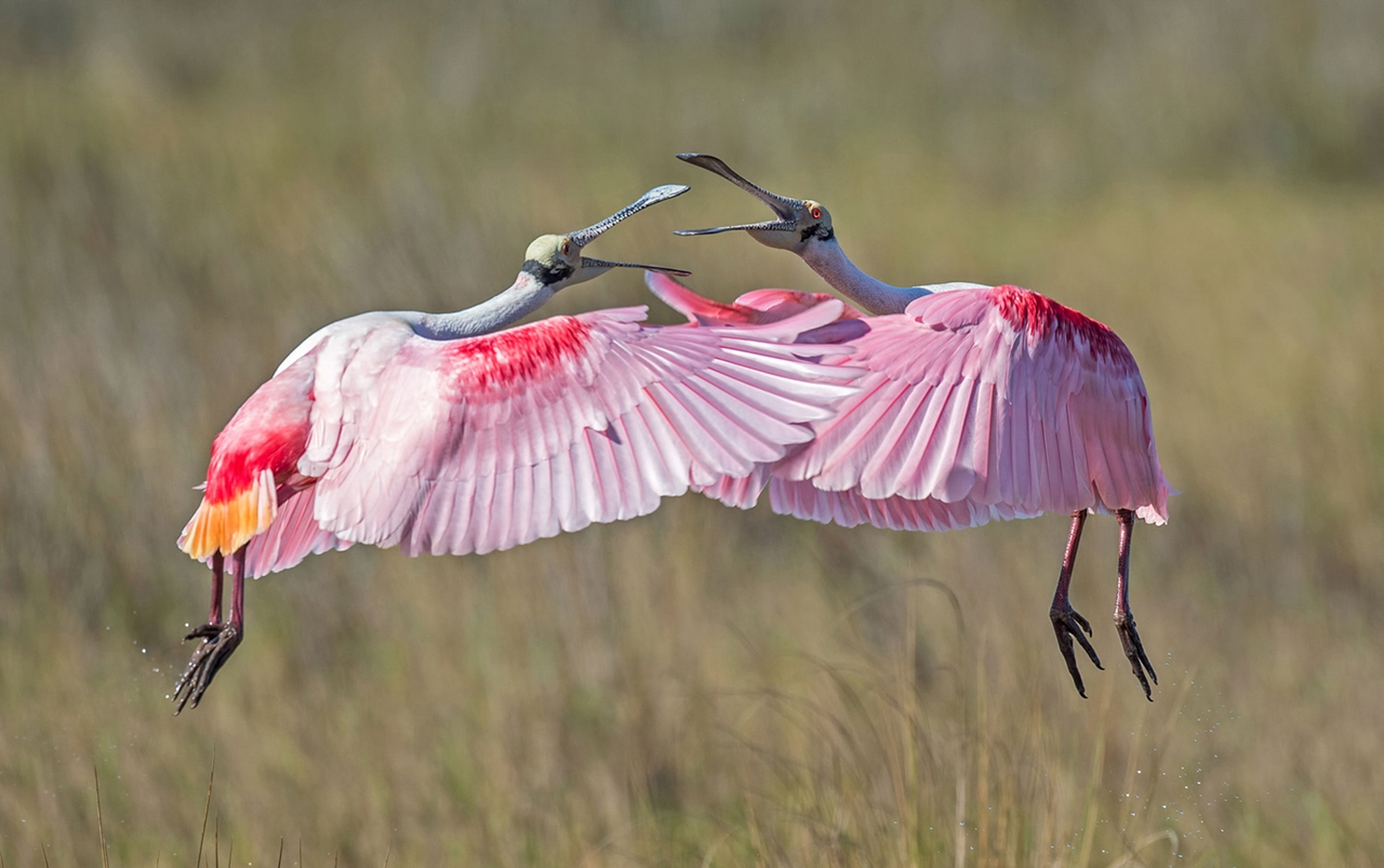 2016 Audubon Photography Awards 24