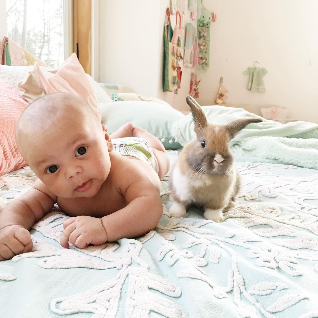 Adorable photo shoot of friendship baby with rabbits, created by the mother 05