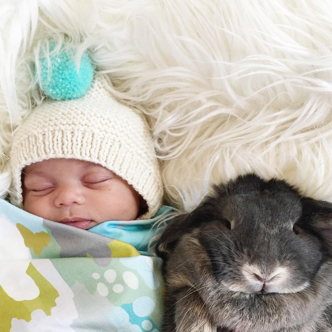 Adorable photo shoot of friendship baby with rabbits, created by the mother 11