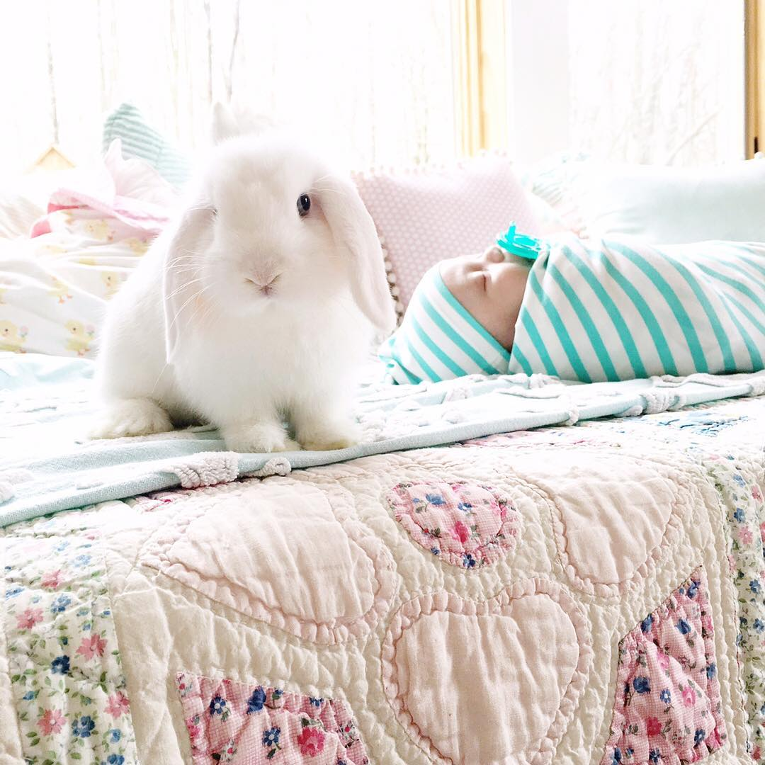 Adorable photo shoot of friendship baby with rabbits, created by the mother 12