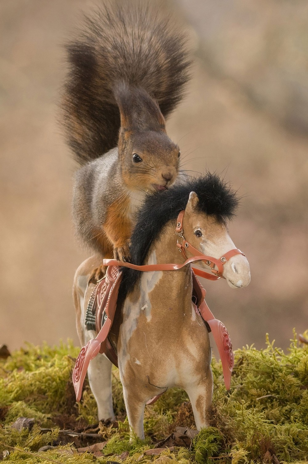 Adorable squirrel-rider 03