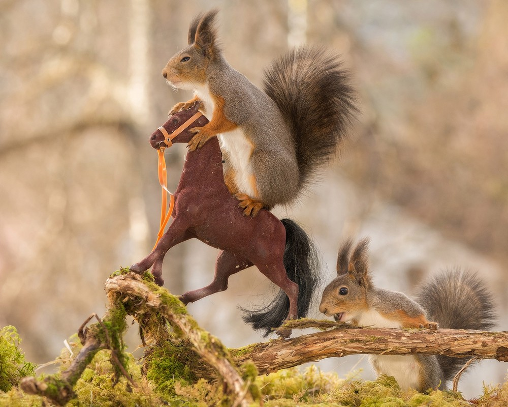 Adorable squirrel-rider 06