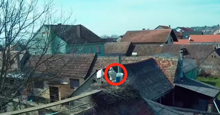 Amazing love story of one pair of storks 03
