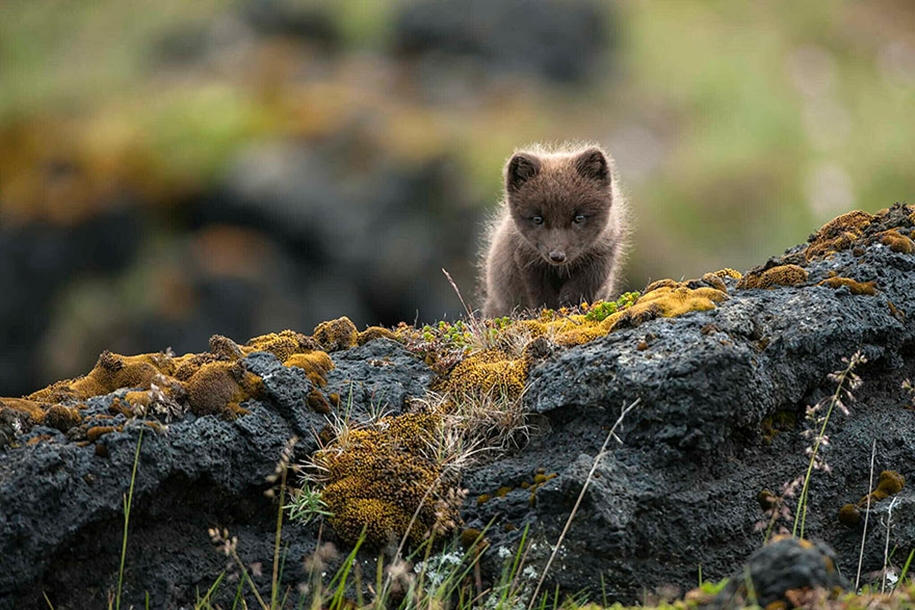 Baby Foxes That Are Too Cute To Be True 19