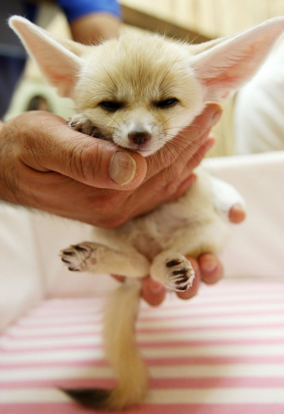Baby Foxes That Are Too Cute To Be True 31