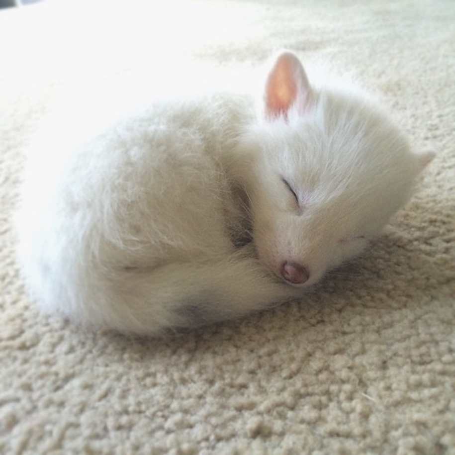 Baby Foxes That Are Too Cute To Be True 35