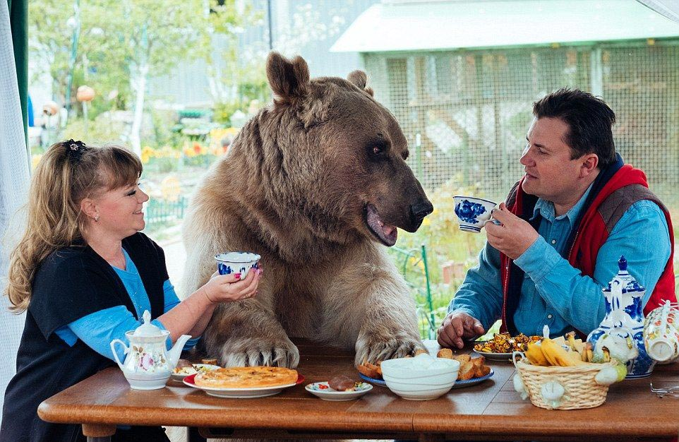 Bear Stepan and his unusual life in a Russian family 01