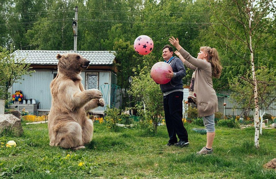 Bear Stepan and his unusual life in a Russian family 08