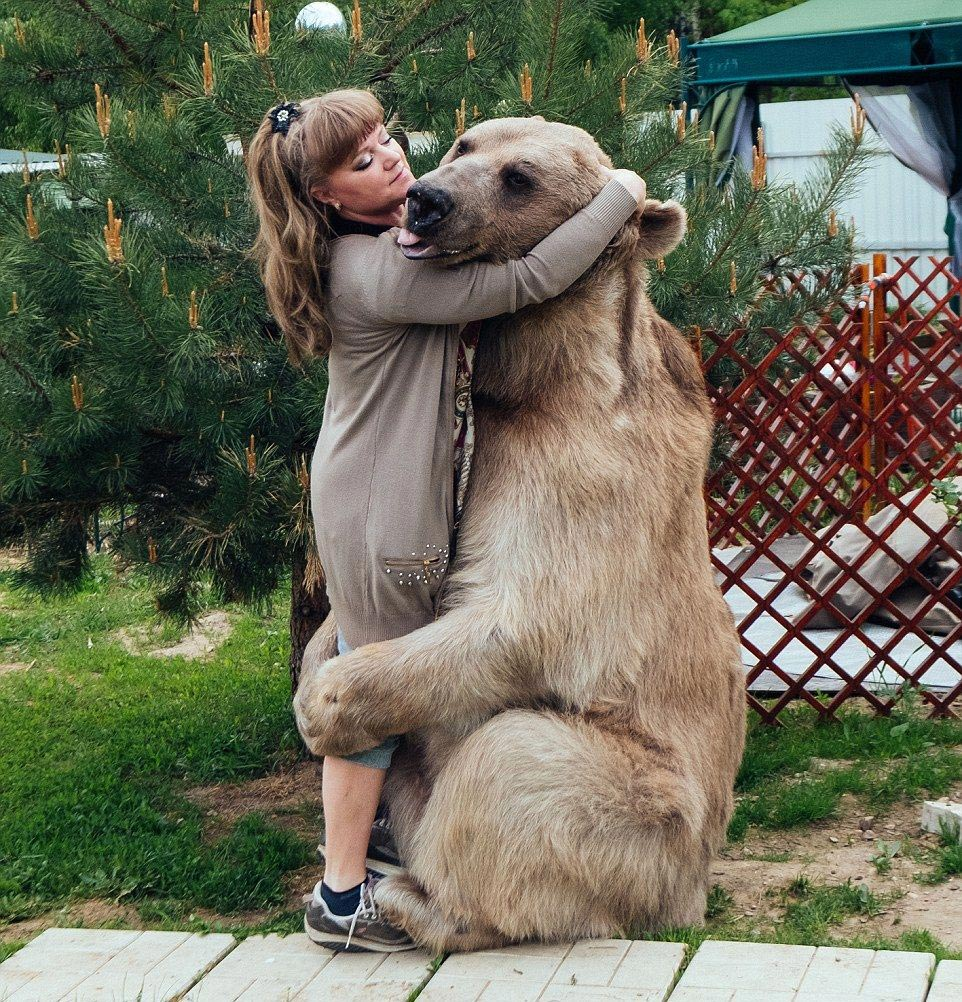 Bear Stepan and his unusual life in a Russian family 09