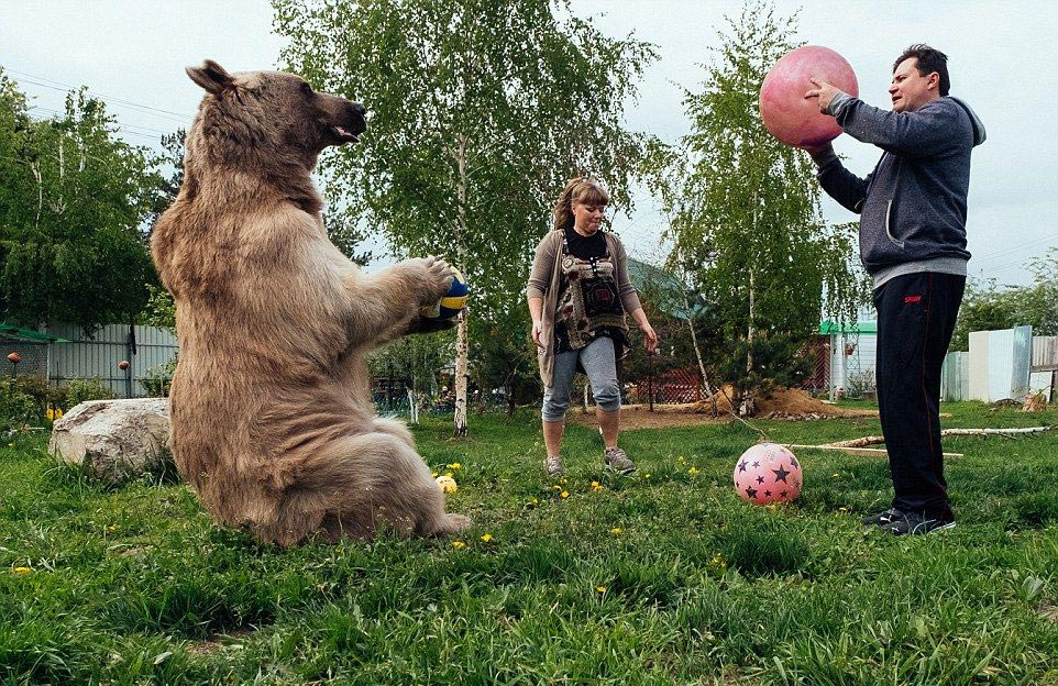 Bear Stepan and his unusual life in a Russian family 11