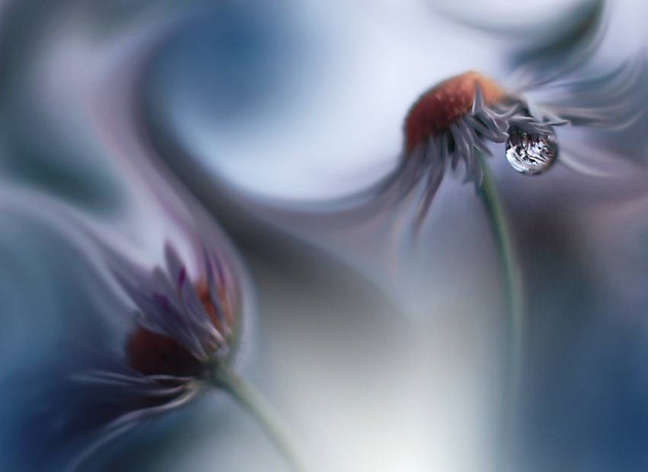 Beautiful and delicate work of the photographer Jay Nan 02