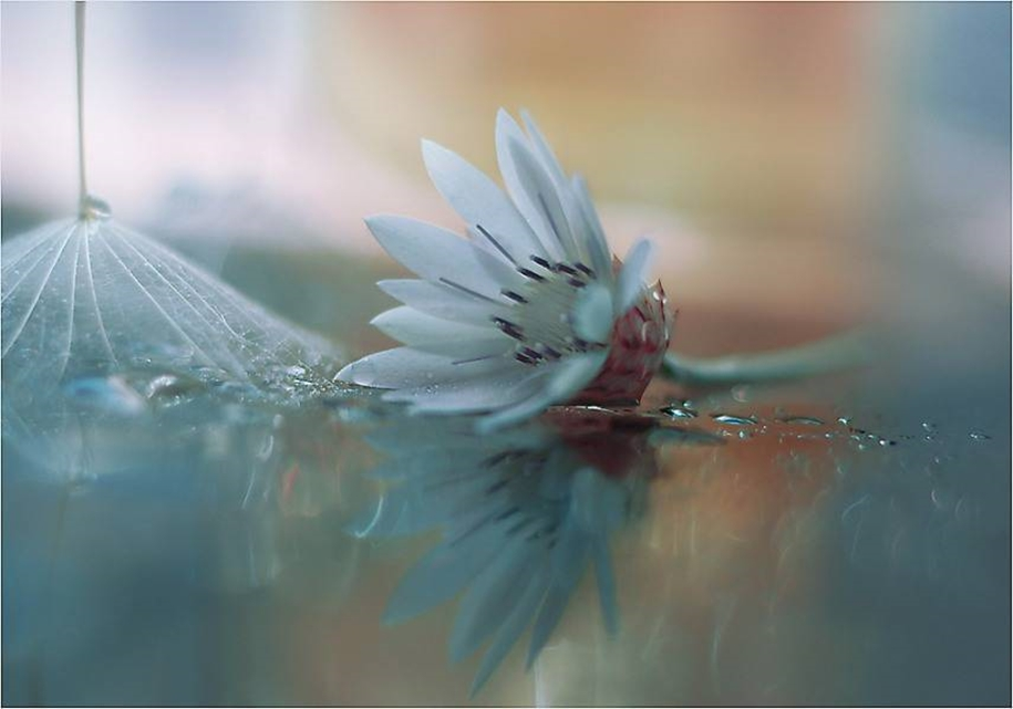 Beautiful and delicate work of the photographer Jay Nan 11