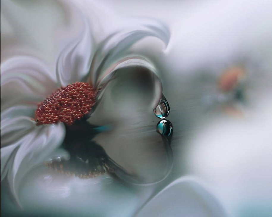 Beautiful and delicate work of the photographer Jay Nan 12