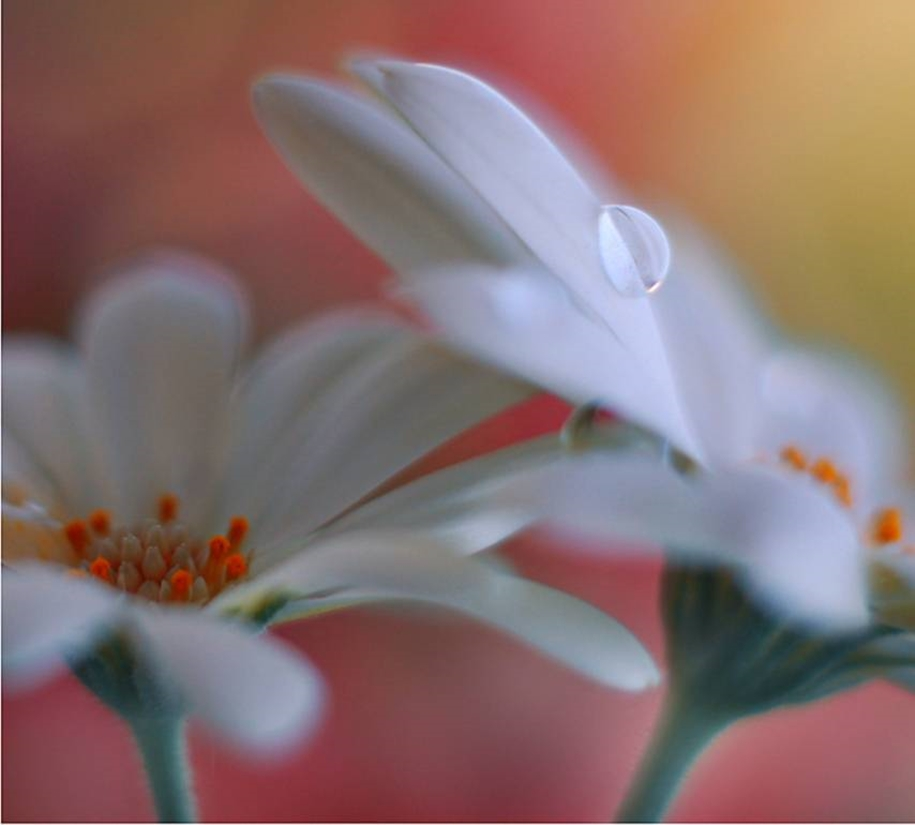 Beautiful and delicate work of the photographer Jay Nan 13