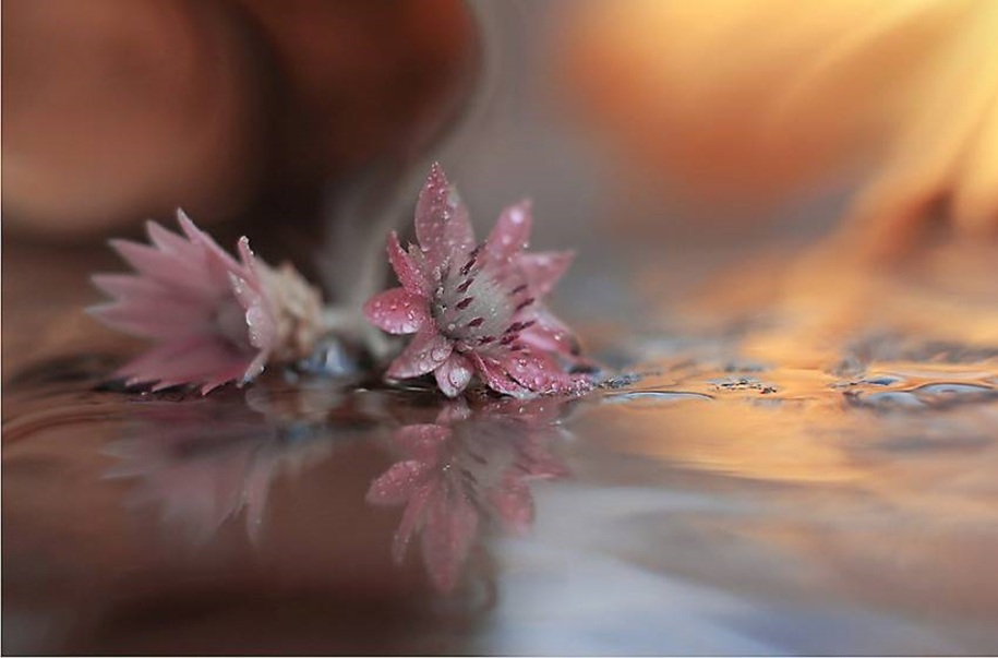 Beautiful and delicate work of the photographer Jay Nan 16