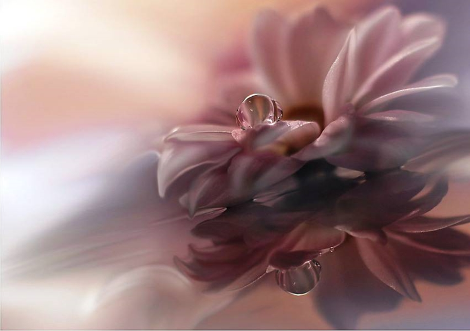 Beautiful and delicate work of the photographer Jay Nan 18