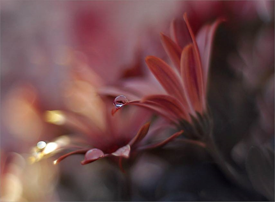 Beautiful and delicate work of the photographer Jay Nan 24
