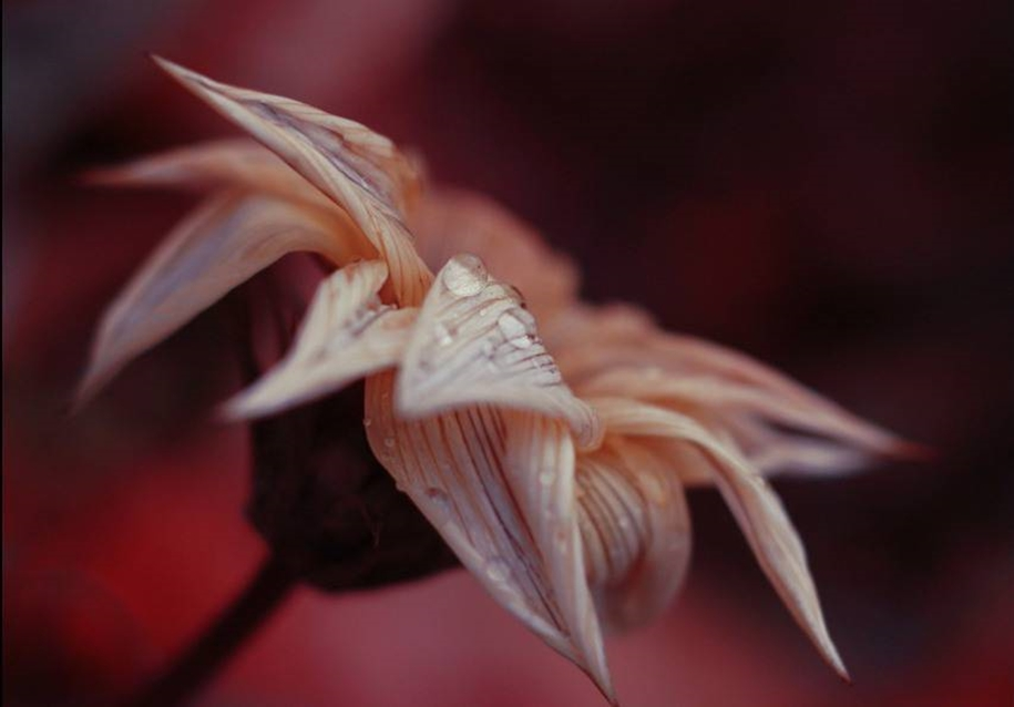 Beautiful and delicate work of the photographer Jay Nan 28