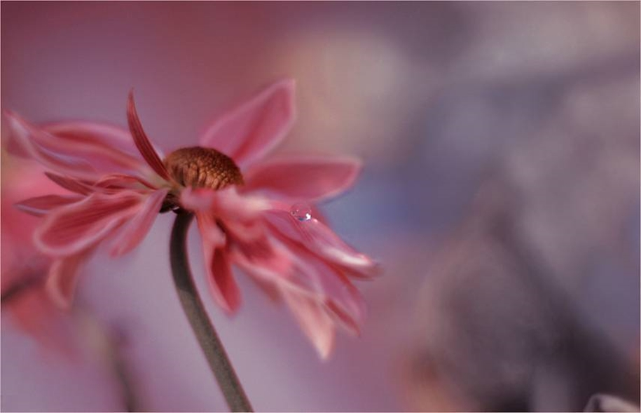 Beautiful and delicate work of the photographer Jay Nan 29