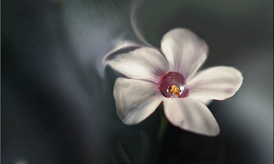 Beautiful and delicate work of the photographer Jay Nan 36