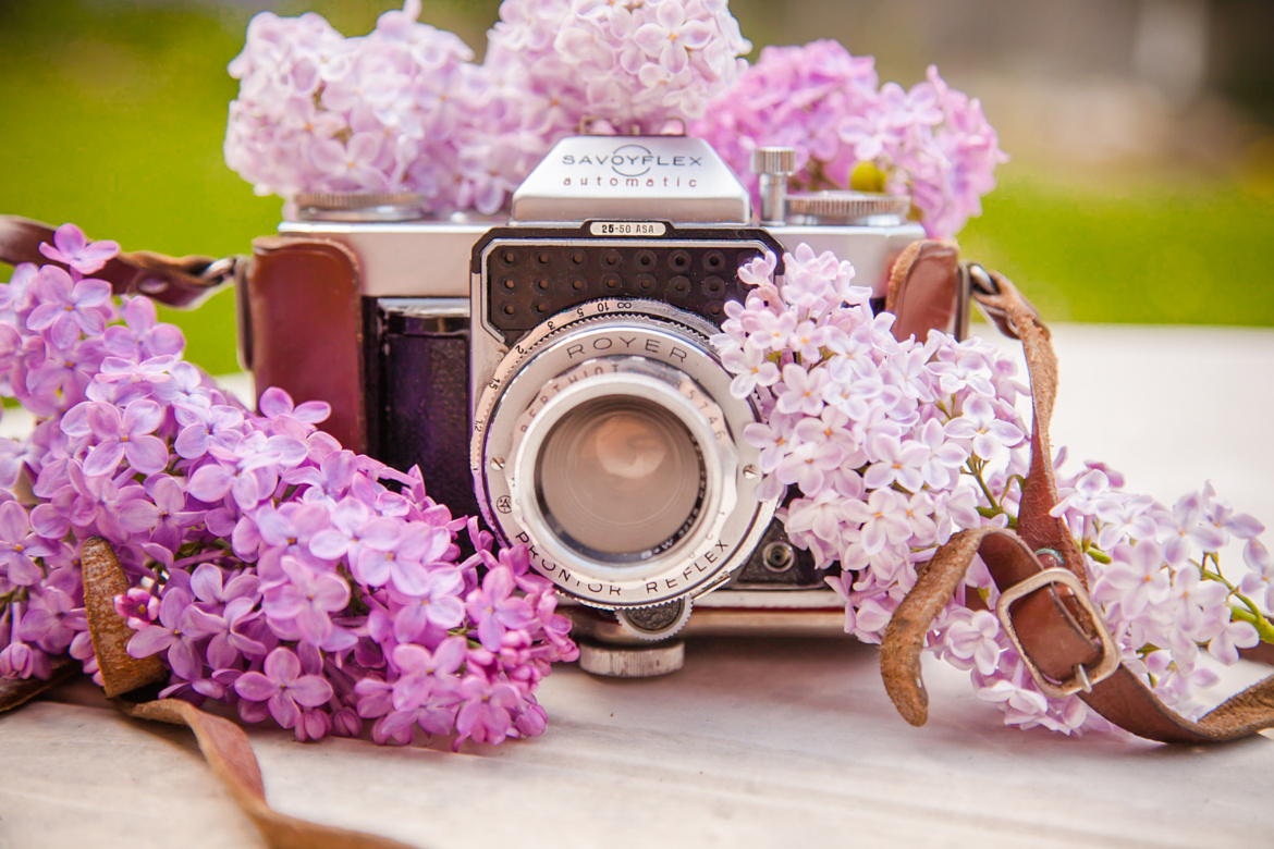 Beautiful lilacs in a still life photos 01