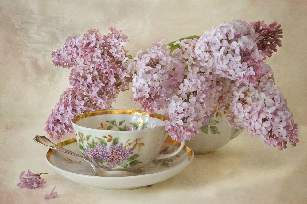 Beautiful lilacs in a still life photos 03