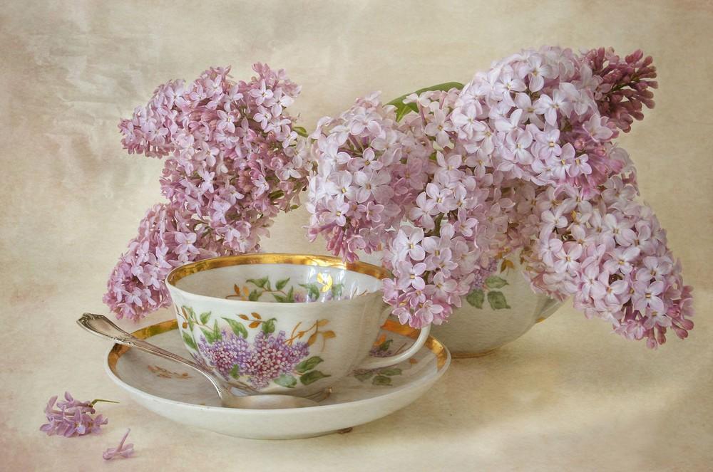 Beautiful lilacs in a still life photos 03