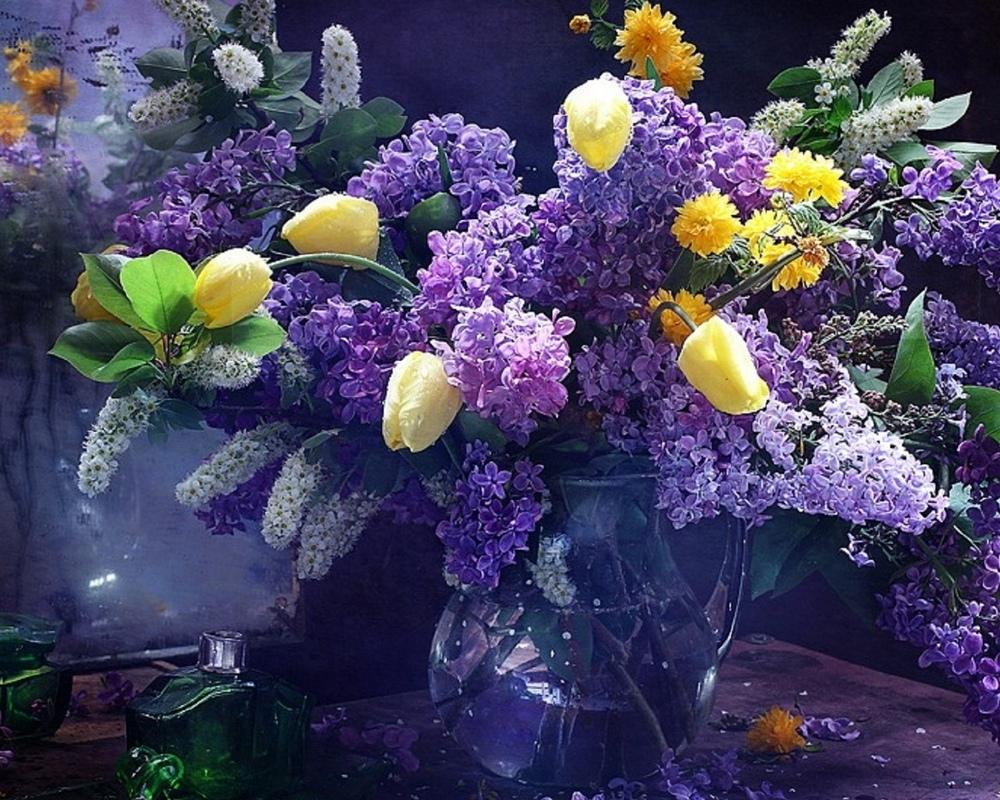 Beautiful lilacs in a still life photos 08