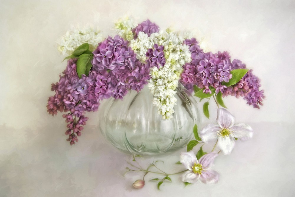 Beautiful lilacs in a still life photos 09
