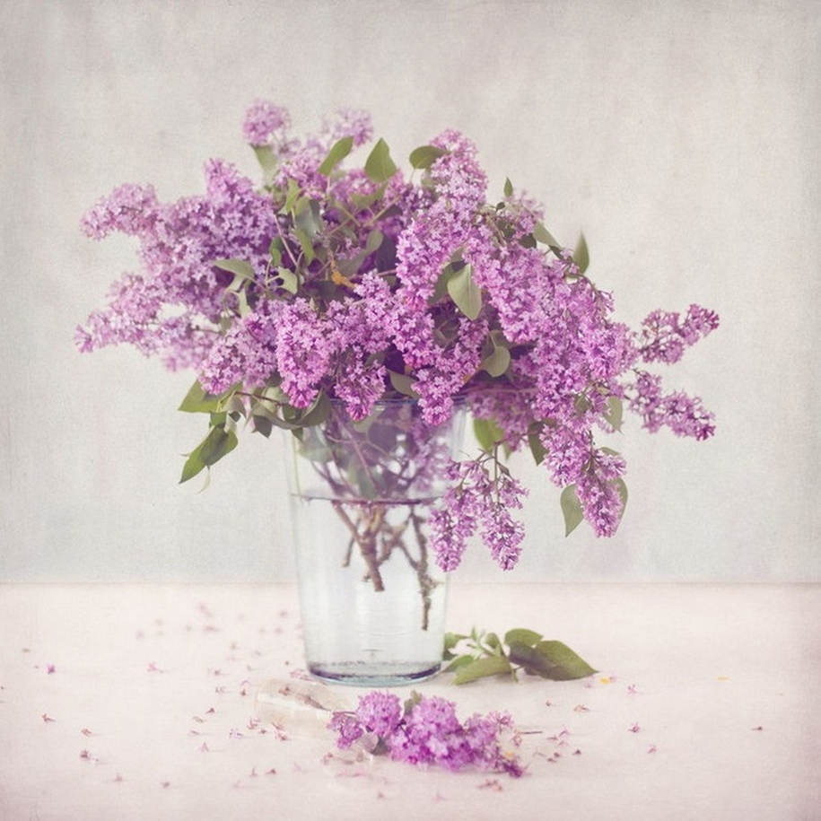 Beautiful lilacs in a still life photos 12