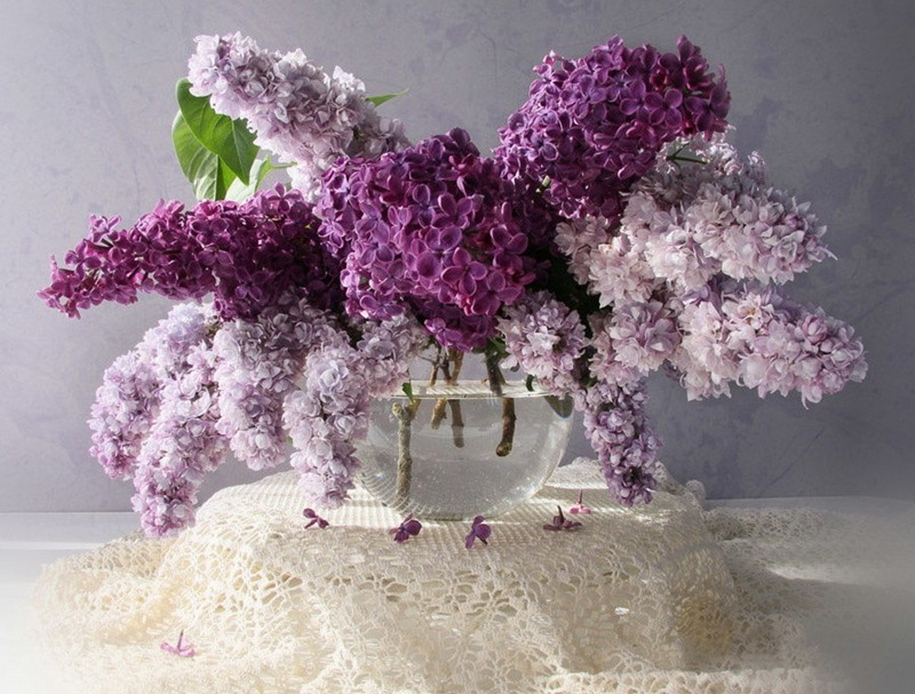 Beautiful lilacs in a still life photos 13