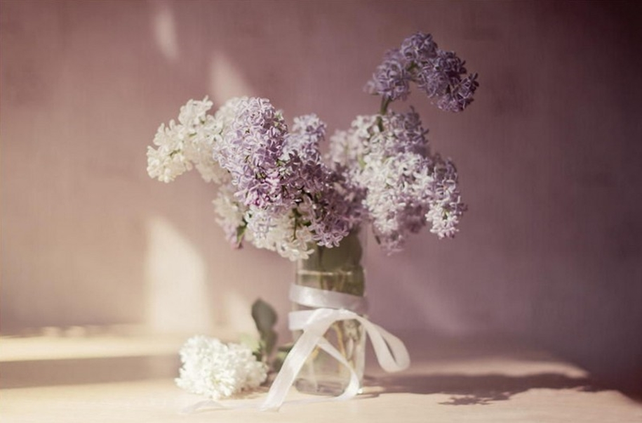 Beautiful lilacs in a still life photos 14