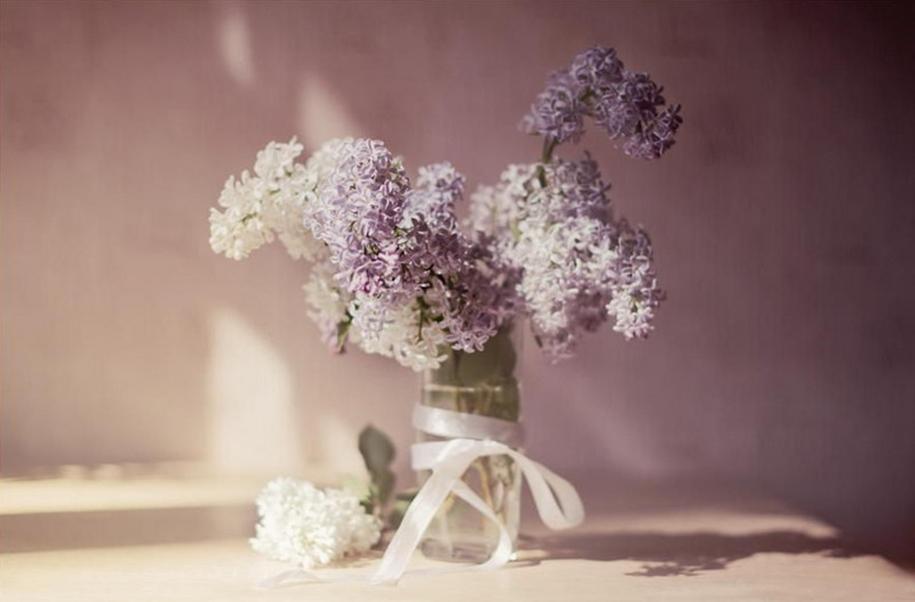 Beautiful lilacs in a still life photos 14