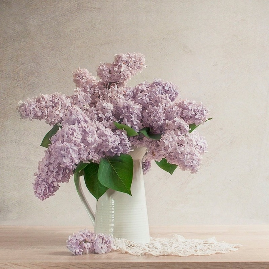 Beautiful lilacs in a still life photos 16