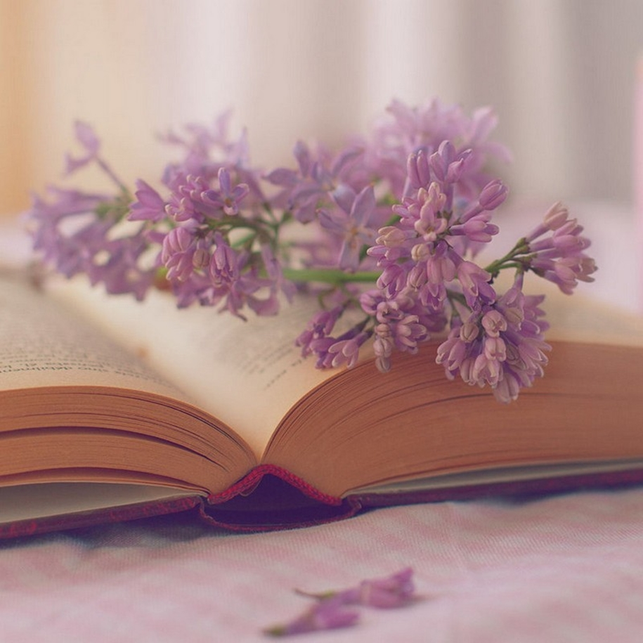 Beautiful lilacs in a still life photos 17