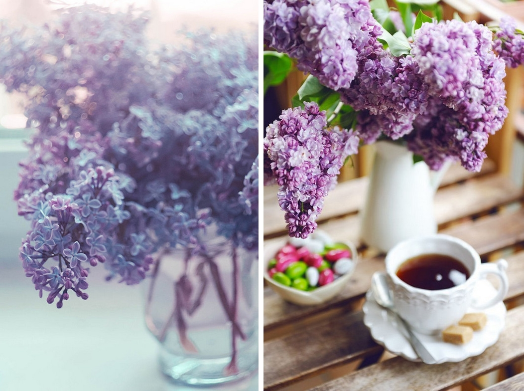 Beautiful lilacs in a still life photos 18