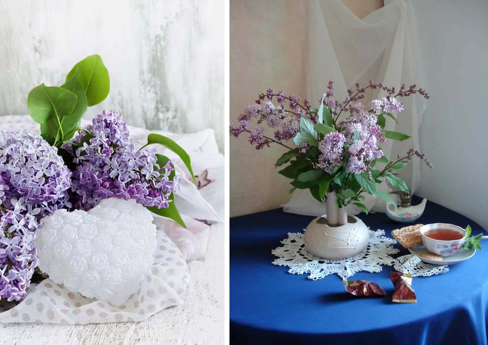 Beautiful lilacs in a still life photos 19