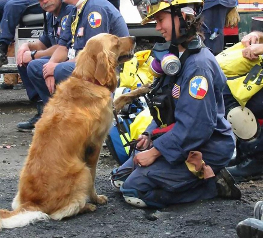 Dog-heroes who don't need a superpower to save lives 08