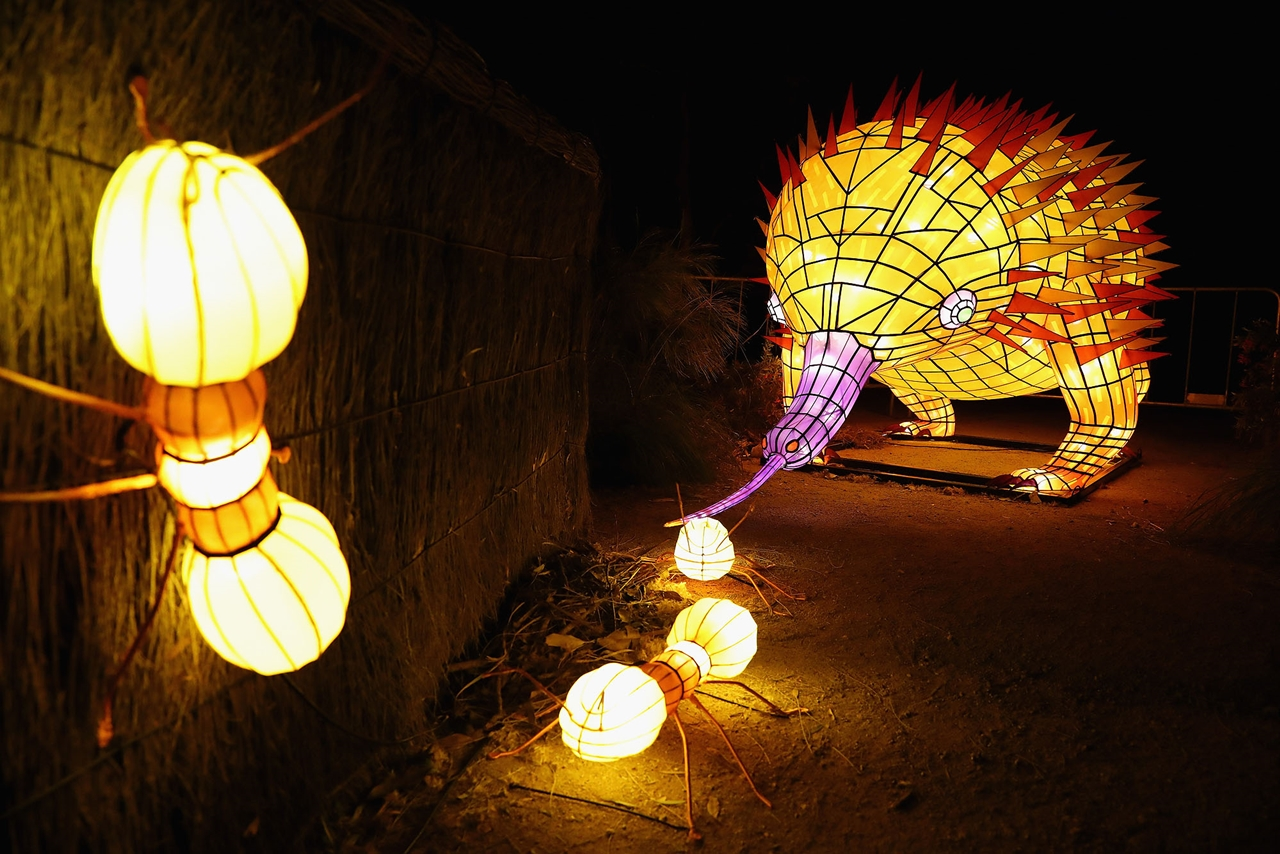 Festival of light sculptures in Sydney 03